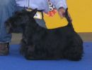International dog show in Tulln, Austria