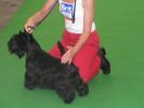 National Dog Show in Mlada Boleslav