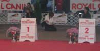 International dog show in Tata, Hungary