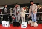 International Dog Show in Katowice